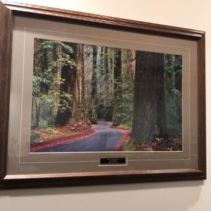 'Redwood Road' Wood  Framed Wall Picture.32x24